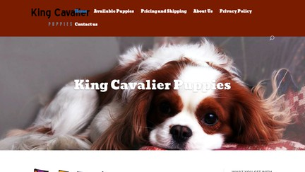 KingCavalierPuppies