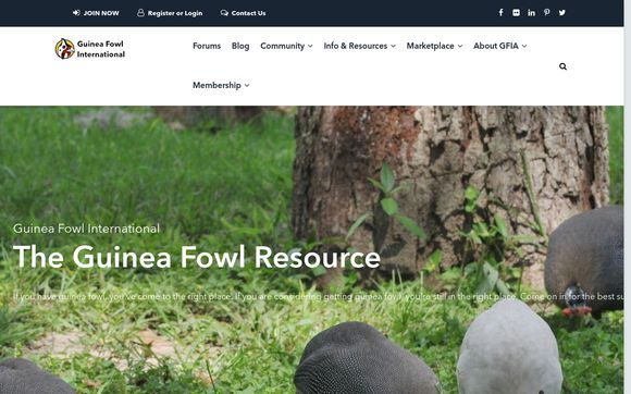 The Guinea Fowl Resources